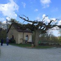 Интересный способ посадки деревьев, корнями вверх! :: Anna Gornostayeva