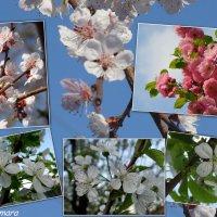 Весна во всей красе... :: Тамара (st.tamara)