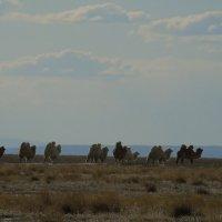 Солончаковые степи на границе с Монголией :: Анна