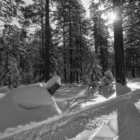 Воспоминание о зиме :: vladimir