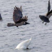 Идёт активная рыбалка... :: Анатолий Клепешнёв
