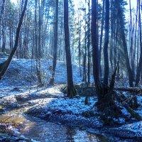 лесной ручей :: Сергей Цветков