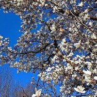 Белые голуби ... :: Владимир Икомацких
