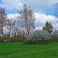 """""""Весна, весна! Как высоко, На крыльях ветерка, Ласкаясь к солнечным лучам, Летают облака!"""" :: Galina Dzubina"""
