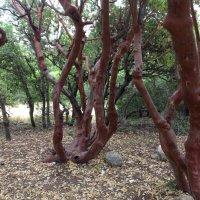 Природа Иордании :: Ирина