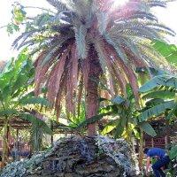 Пальма с фонтаном :: Вера Щукина