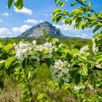 Гора Змейка. :: igor