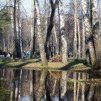 Отражения :: Юрий Оржеховский