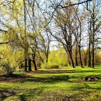 Весеннее утро в парке :: Маргарита Батырева