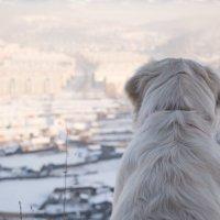 Мир глазами собаки :: Надежда Преминина