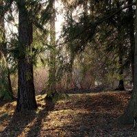 Всё лес и лес. А день темнеет...(с) :: Ирина Румянцева