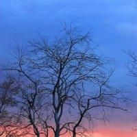 Мертвое дерево :: Вячеслав Ложкин