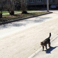 Кошка гуляет сама по себе . :: Мила Бовкун