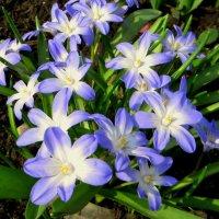 Апрельское цветение! :: Ирина Олехнович