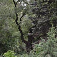 Ботанический сад :: Анатолий Евстегнеев