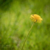 Сочное весеннее :: Аl Anis