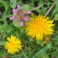 Весенняя палитра полевых цветов :: Нина Корешкова