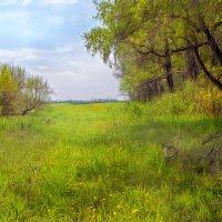 Окресности села Треща. Кемеровская область :: Edward Metlinov
