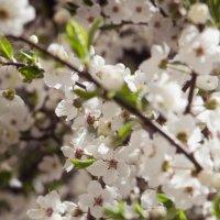 Весенние цветы :: Nadin Artemjeva