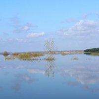 Весенний разлив реки Тобол. :: галина