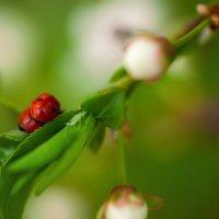 Весна пришла, любовь повсюду :: Алена Бадамшина