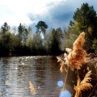 солнцем согрета природа :: Аксана Еськина
