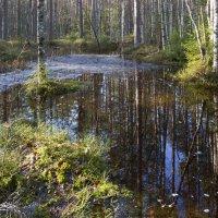 Лесные отражения :: Aнна Зарубина