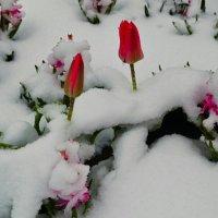 После снегопада  22.04.2016 :: Милешкин Владимир Алексеевич