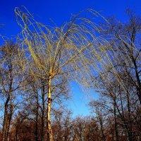 Вот такое  дерево.... :: Валерия  Полещикова