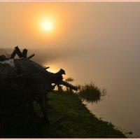 Утро туманное :: Геннадий Ячменев