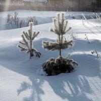 Утро :: Arcadii Mayrhofen