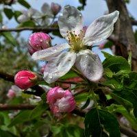 Весна :: Marina Timoveewa