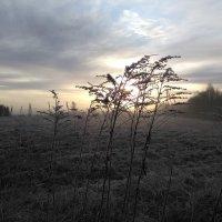 Утро туманное, утро морозное... :: Mariya laimite