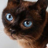 Кошка :: Алина Хамель