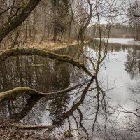 Дворцовое озеро. :: Наталья Иванова