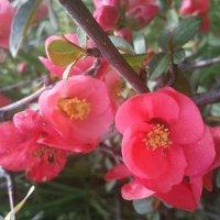 Весна все смелее вступает в свои права :: Ирина