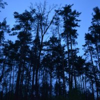 Лес перед сном :: Ростислав