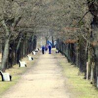 В парке весной :: Сергей