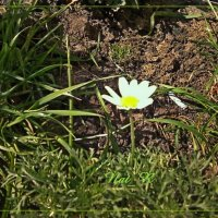 весна такая нежная ... :: maxim