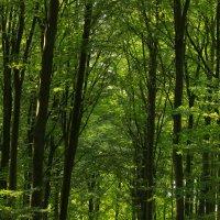 в лесу :: Марат Макс