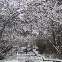зимний парк :: tgtyjdrf