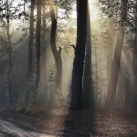 Рассветной солнечною тайной... :: Лесо-Вед (Баранов)
