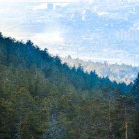 С горы спускаясь, смотрю на город мой родной... :: Сергей Алексеев