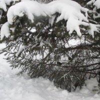 Красавица-зима. :: Valentina
