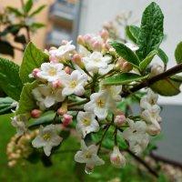 """""""...Час цветенья! В красу одевает он землю!!!!!...."""" :: Galina Dzubina"""
