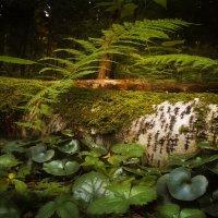 Лесной натюрморт :: Алексей Строганов