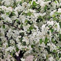 «Яблони в цвету - весны творенье» Резник. :: Валентина ツ ღ✿ღ