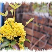 Весны, цветущие сады! :: Валентина ツ ღ✿ღ