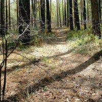 В апрельском лесу :: Александр Садовский