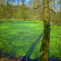 Свет... и тень на поверхности изумрудного озера и дерева :: Nina Yudicheva